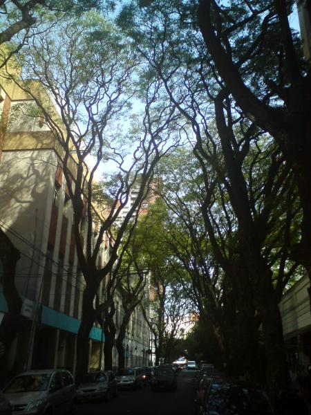 Altos árboles